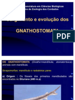 6-Gnatostomata_e_condricties