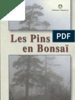 Les Pins en Bonsai