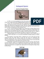 Endangered Species-peregrine Falcon