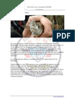 Ac_fish_12_la Pesca Del Pejerrey Chileno_1a Parte