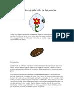 Tipos de Reproduccion de Las Plantas