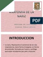 Anatomia de La Nariz