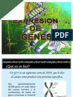 Expresión de Genes