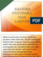 Anatomi Payudara Dan Laktasi