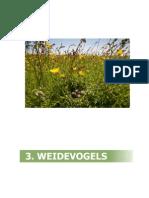 Kernkwaliteit Laag Holland - Weidevogels