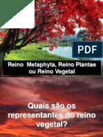 Reino Plantae