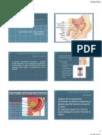 Anatomia Del Aparato Re Product Or Masculino