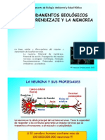 3 La Neurona