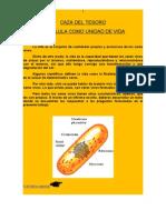 CAZA DEL TESORO - La célula como unidad de vida
