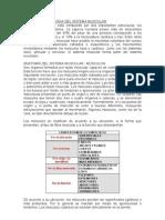 467_anatomia y Fisiologia Del Sistema Muscular