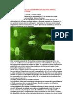 La Bacteria e Coli Europea y Su Tratamiento Biomagnetico