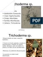 Trichoderma sp