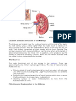 Location and Basic Structure of the Kidneys