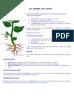 Las Plantas y Sus Partes Dcto