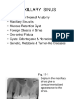 Chapter 17 Maxillary Sinus.slides