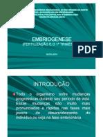 Embriogenese(Fetilização e o 1ºTrimestre)