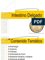 24. Intestino Delgado