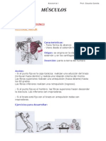 anatomia Musculos