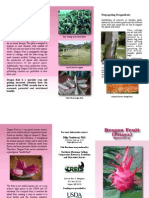 Brochure Dragon Fruit Web
