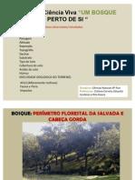 Carcteristicas Do Bosque