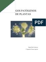 HONGOS PATÓGENOS DE PLANTAS