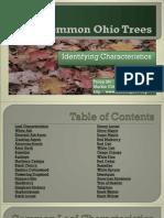 Common Ohio Trees