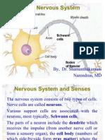 02 Central Nervous System Ppt 2027