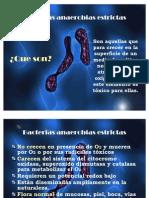 bacterias anaerobias estrictas