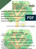 Proyecto de Aprendizaje 2º y 5º grado el maravilloso mundo de las plantas