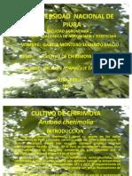 CULTIVO DE CHIRIMOYA