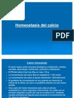 5. Homeostasis Del Calcio )
