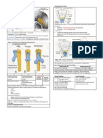 Development of Respiratory System