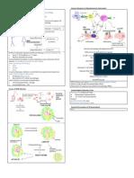 Immunology of Pulmonary TB
