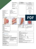 Pathology of Intestinal Obstruction