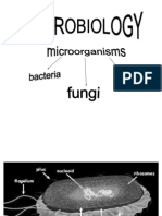 Ceu - Microbio 1 Lab