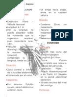 Páncreas / Duodeno