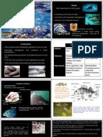 Peixe Taxonomia e Caracterizacao