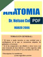 Anatomia - Torax y Columna Vertebral