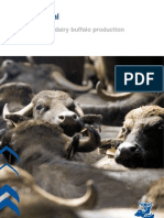 Efficient Dairy Buffalo Production