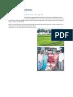Agri Tourism - Digging gold in rural India