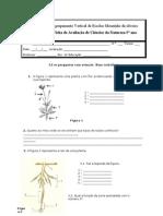 TESTE PLANTAS 2-df