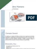 El Cerebro Humano