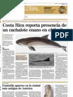Cachalote enano en Caribe Costa Rica Keto
