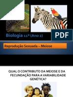 BG 16 - Reprodução sexuada (Meiose) Parte II