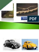 BG 24 - Argumentos Do Evolucionismo (2)