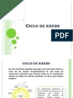 07_ciclo_de_krebs