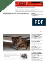 GUAU 2011-07-06 Denunciar Cruel Dad Animal a La Linea 17