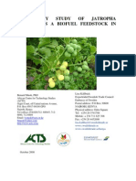 Jatropha Feasibility Study Final