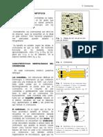19cromosomas-100113081147-phpapp01