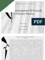 CC Chicken Female Gonads Development